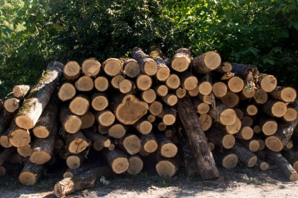Every town big or small has huge piles of wood