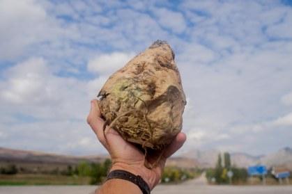 All hail the Turnip