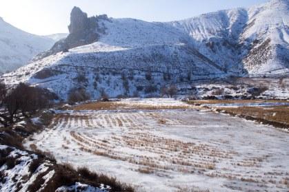 Frozen paddy feild