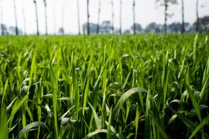 First grass we've seen in months
