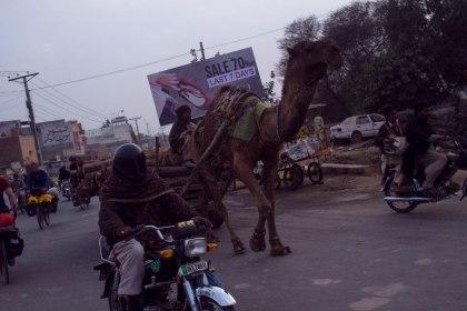Just a camal drawn cart down Sahiwal mainstreet