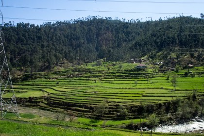 Appperently there are rice paddies in northern Pakistan. Surprised all of us.
