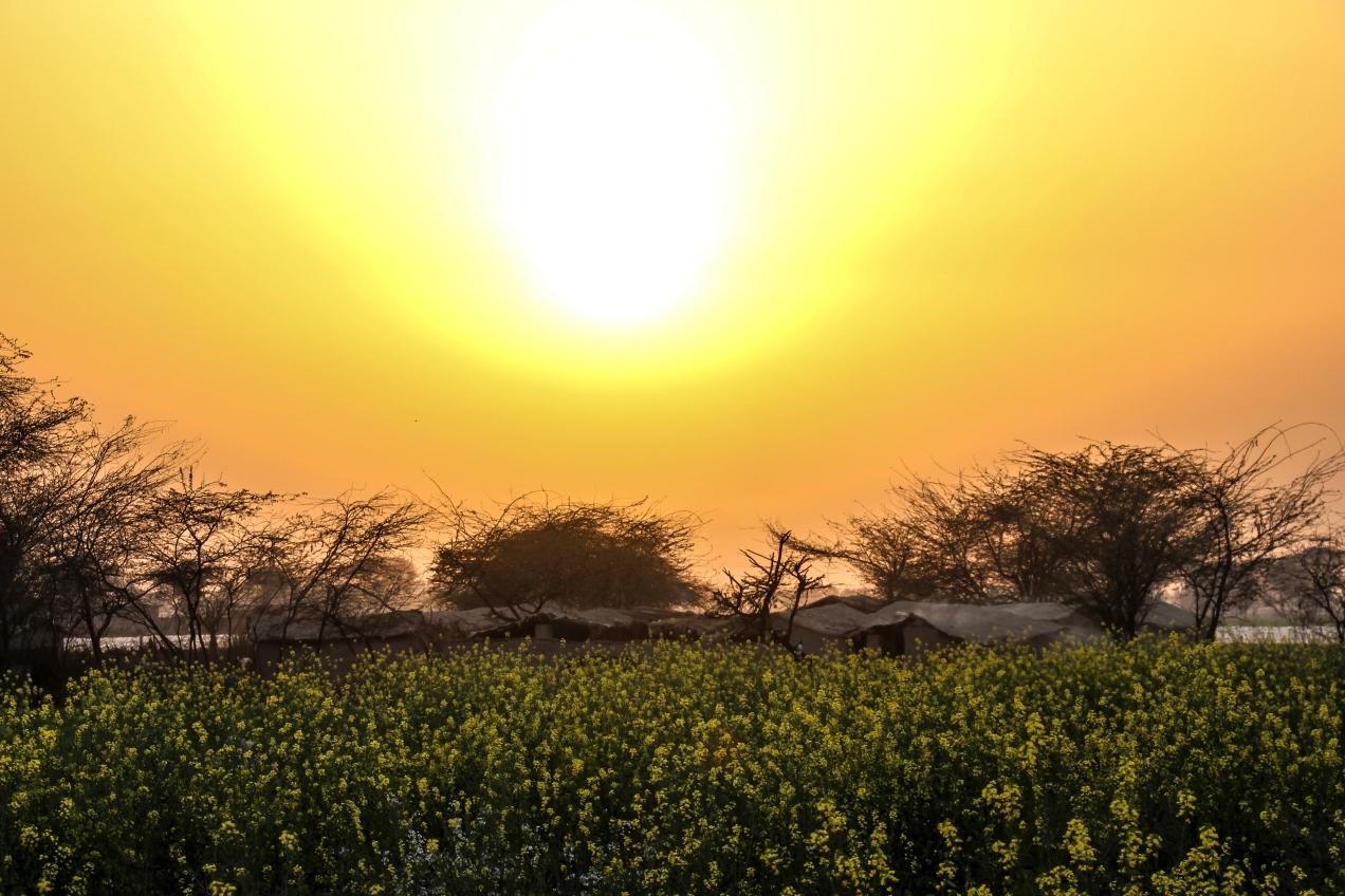 Lush Punjab