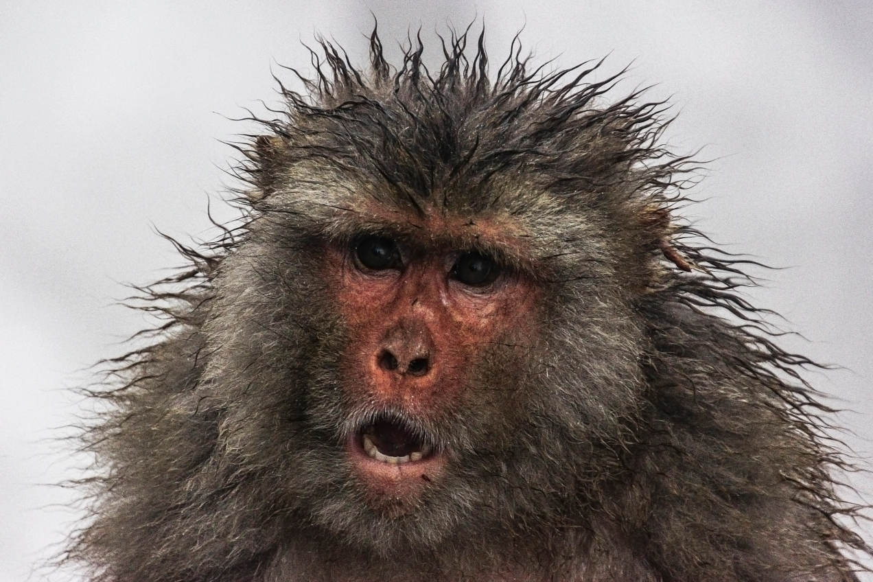 Demonic monkey