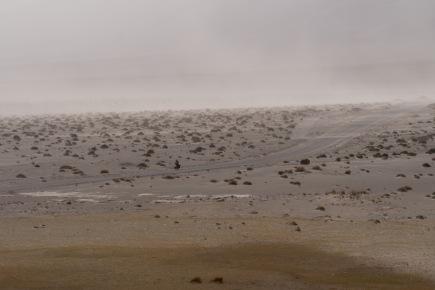 Fleeing the dust