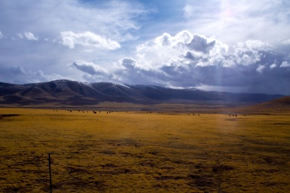 High grasslands